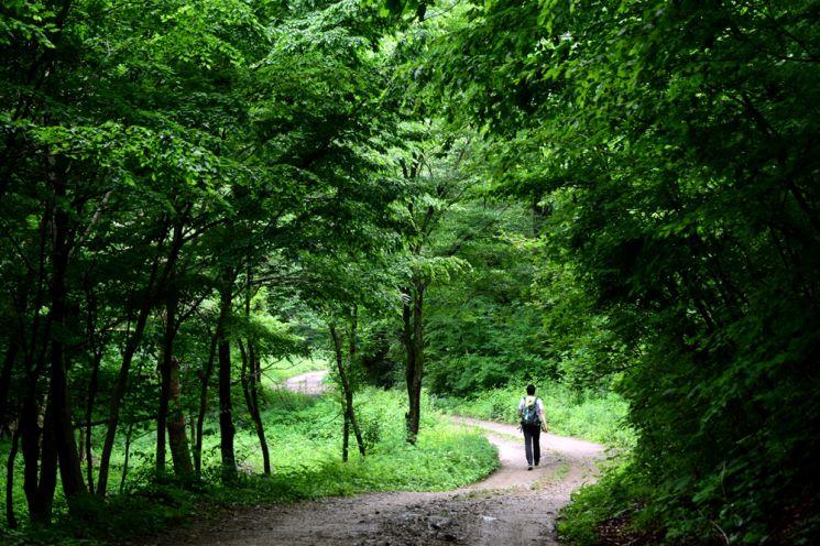 자작나무숲으로 가는길