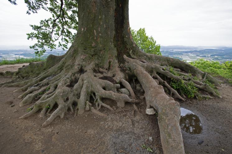 나무만으로도 아름답지만, 나무에서 내다보는 풍광은 더 없이 훌륭하다.