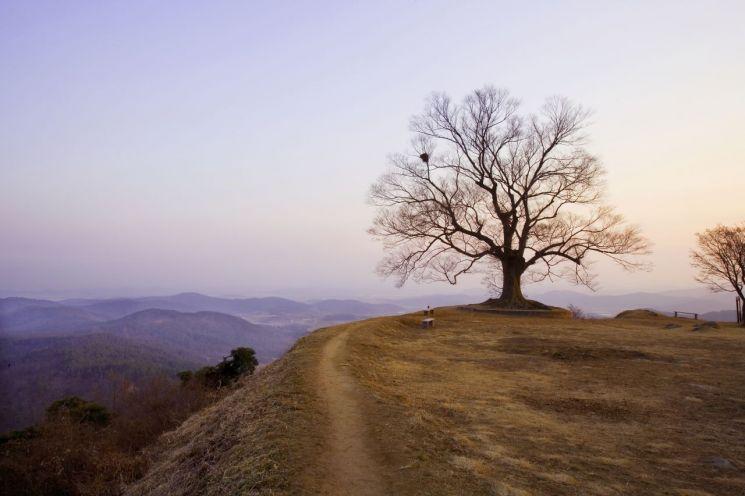[고규홍의 나무와 사람] 400살 느티나무 '천년의 愛民'을 품다