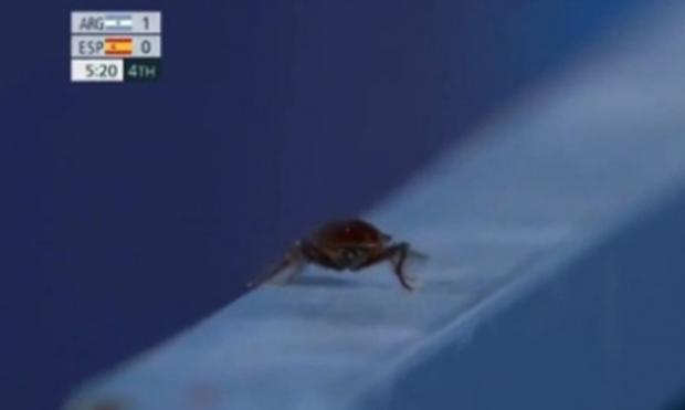 도쿄올림픽 하키경기장에 나타난 바퀴벌레. 사진=TyC Sports 중계 화면 캡처