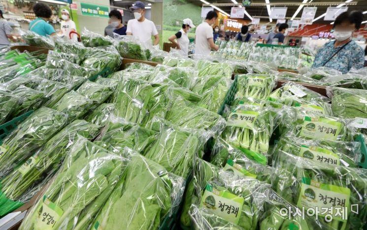 [포토]연이은 무더위로 채소값 상승 우려