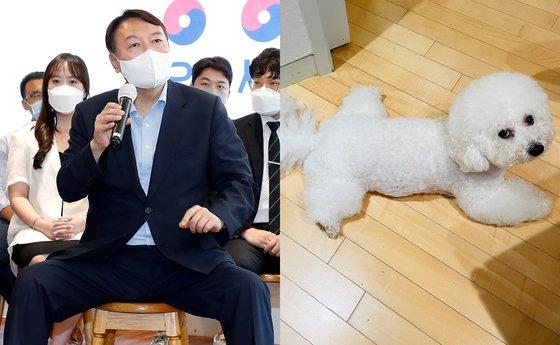 윤석열 전 검찰총장과 반려견 마리./사진=연합뉴스, 인스타그램