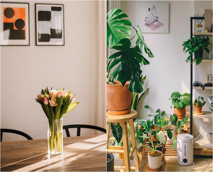 공간 꾸밈과 안정감을 주는 반려 식물 키우기가 트렌드다. ⓒunsplash
