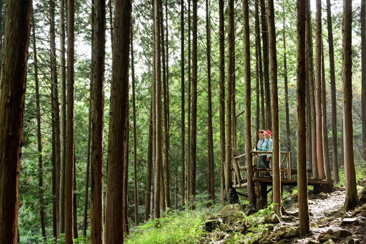 완주 공기마을 편백숲