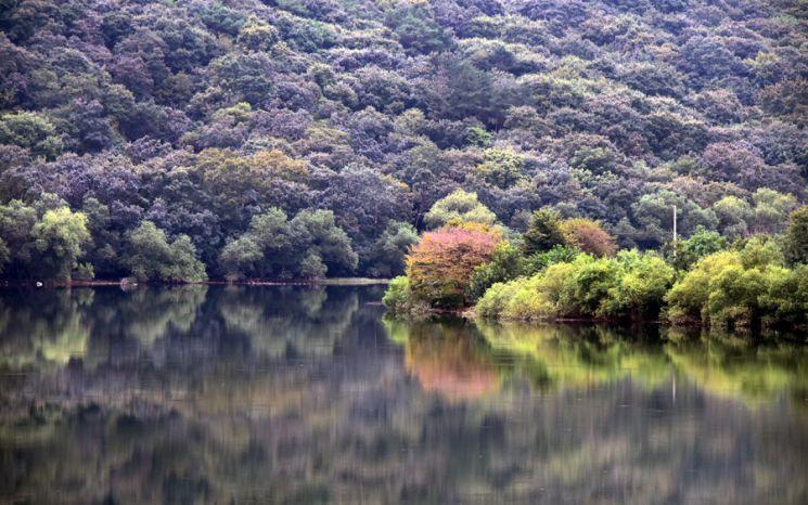 가을빛으로 물들기 시작하는 대아저수지의 아침