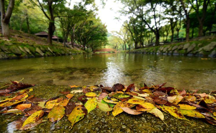 가을빛이 완연한 고산자연휴양림