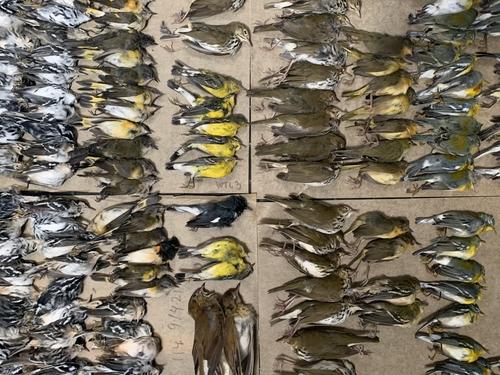 철새들이 미국 세계무역센터 건물 외벽에 부딪혀 떼죽음을 당했다. /사진=연합뉴스