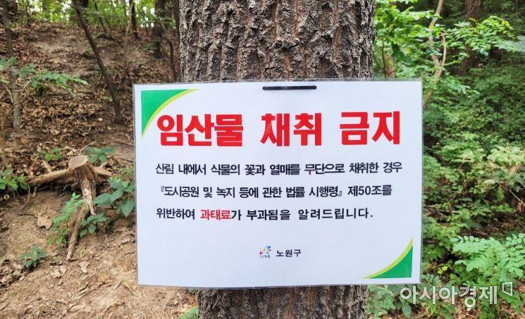 불법 임산물 채취는 야생 동물의 먹이를 줄어들게 함으로써 결국 자연을 파괴하는 행위다. 사진=한승곤 기자 hsg@asiae.co.kr