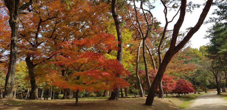 파주 장릉 느티나무 숲