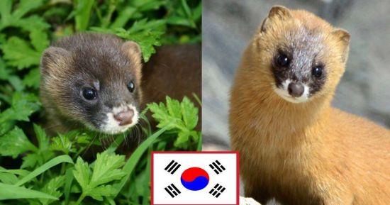 일본 생태계 작살 낸 한국산 동물