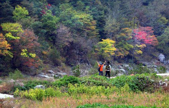 [조용준의 여행만리]지리산 물들인 가을, 걸어야 보이는 풍경