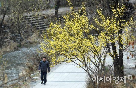 [포토] 청계천의 봄