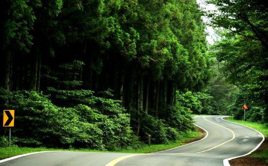 [조용준의 여행만리]'비밀의 숲'이 열린다…허락된 시간은 열흘