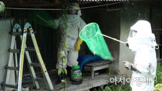 [말벌 주의보]①쏘이면 사망? 말벌집 직접 제거해보니…