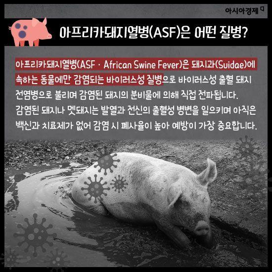 [카드뉴스]초비상 아프리카돼지열병으로 '삼겹살'이 사라진다?