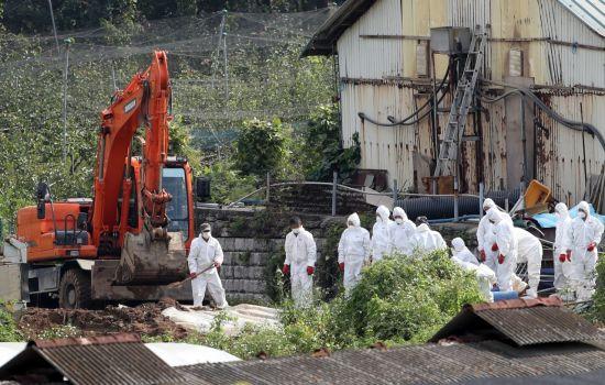 인천시, 돼지열병 살처분 보상금 60억원 선지급