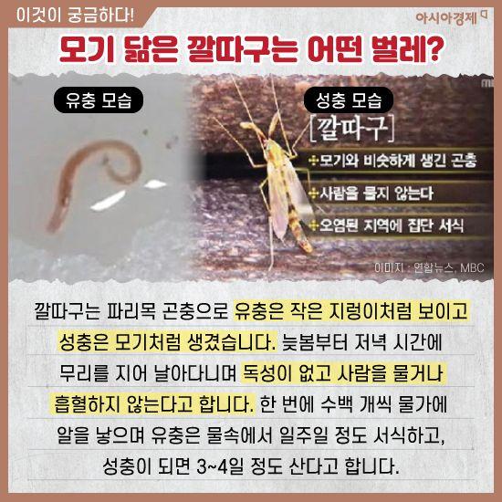 [카드뉴스]수돗물 비상, '유충' 니가 왜 거기서 나와?