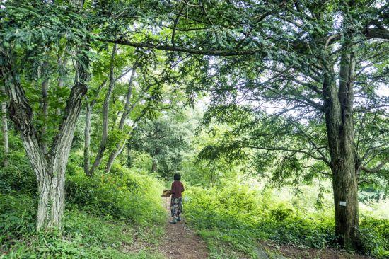 [조용준의 여행만리]숲이 나를 깨운다‥비자나무, 편백나무숲 이것이 힐링이다