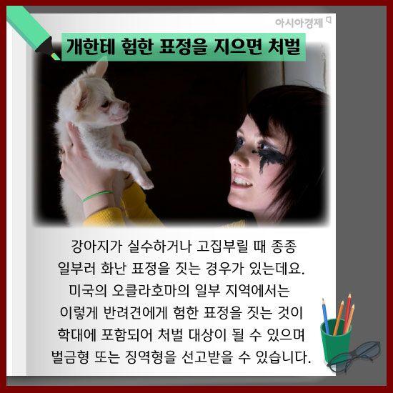[카드뉴스]동물도 가족, 인상 쓰거나 외롭게 해도 학대