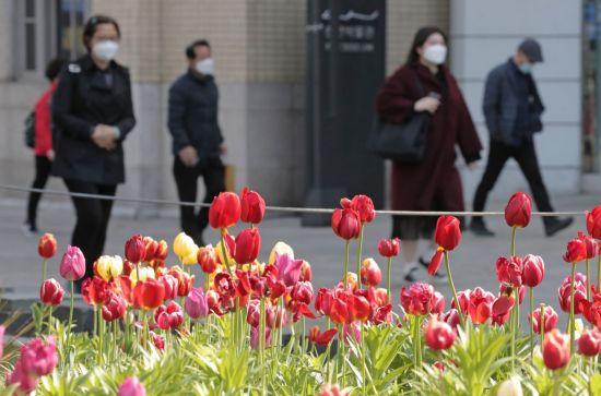 [내일날씨] 출근길에 꽃의 봄이 나 빠지고 … 아침 기온이 섭씨 5도까지 내려갑니다