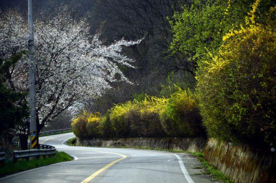 [조용준의 여행만리]호숫가 기암절벽 꽃과 솔의 향연…숨겨진 '힐링 성지'