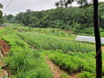 '가짜농부' 의심되도 농지 강제처분·처벌 쉽지 않아