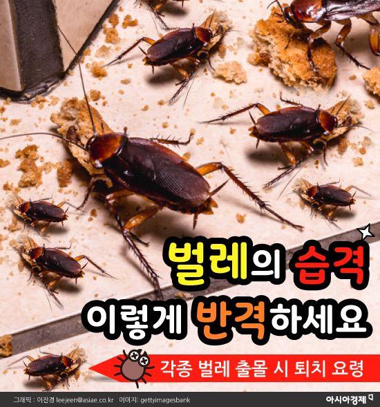 [카드뉴스]벌레의 습격 이렇게 반격하세요