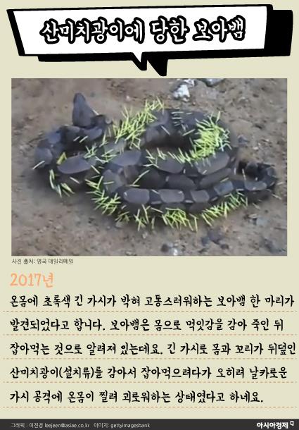[카드뉴스]독사의 맹독, 토끼의 '모성애' 앞에 무용지물