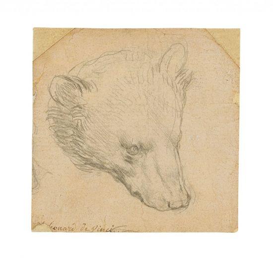 레오나르도 다빈치 작품 '곰의 머리' 경매