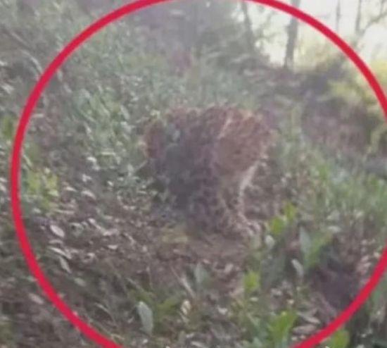 """""""어린 표범들은 고양인가…"""" 中 동물원서 표범 3마리 탈출, 늑장 공지 논란"""