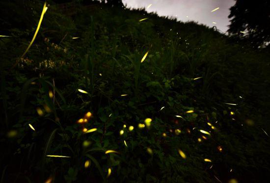[조용준의 여행만리]첩첩산중 오지, 칠흑 같은 밤에 찾아온 초록빛 유영