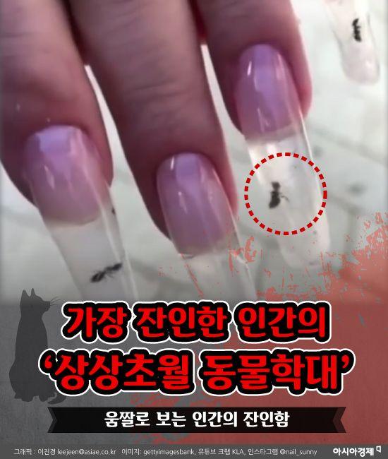 가장 잔인한 인간의 '상상초월 동물학대' [모션그래픽뉴스]