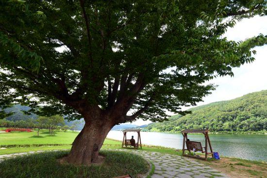 [조용준의 여행만리]북한강 '사랑나무' 아래서 띄우는 '사랑맹세'